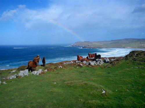 dunfanaghy-donegal-horses